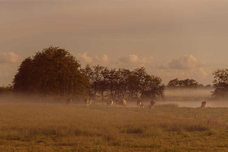 Early morning #1 - Vroeg op pad, net na zonsopkomst kwam de mist opzetten.