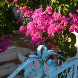 Grieks stilleven