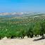pano van olijfboomgaard