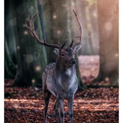 De nieuwe prins van het oude bos