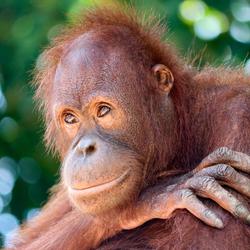 Doutzen op Borneo
