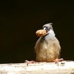 Nuts (uitgesneden)
