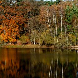 Herfst landschap boswachterij Dorst