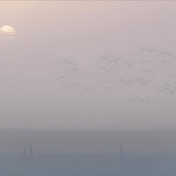 Misty morning in pastel..