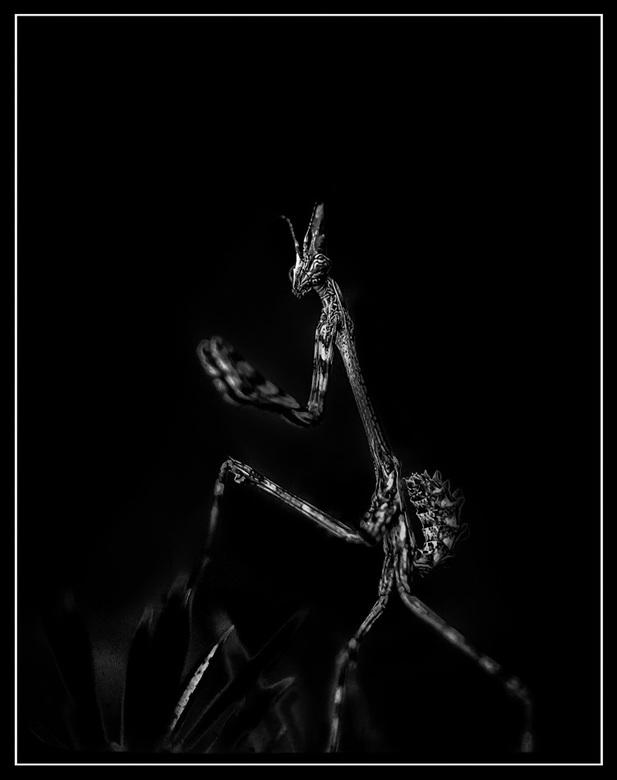 Alien - Buitenaards .....