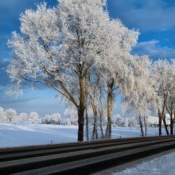 bevroren boom in het zonnetje
