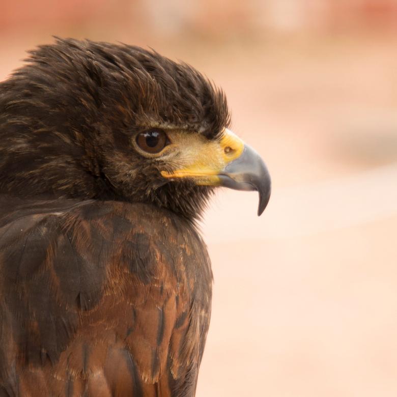 Fly like an eagle -
