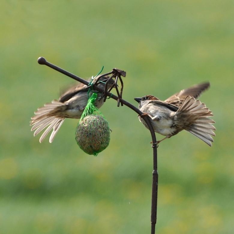vechtend... - Ja als vogels hongerig zijn vechten ze ook om voedsel...