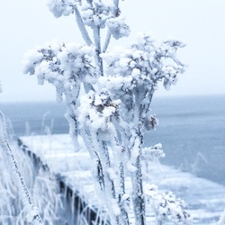 Macro Winter