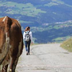 Mooiste achterste van Oostenrijk