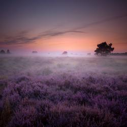 Purple autumn