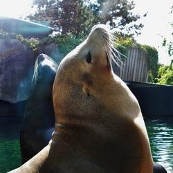 De kijkende zeeleeuw!
