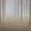 mist in het bosje