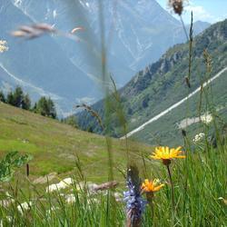 Berghelling Chamonix