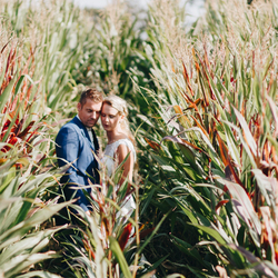 Love In The Cornfield