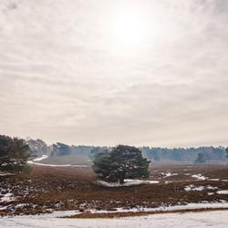Winters heidelandschap - Brunssummerheide