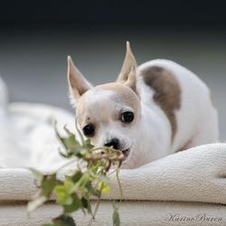 Pup Benji