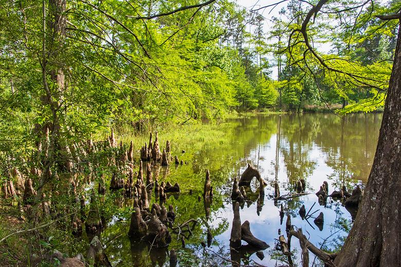 WG Jones State Forest