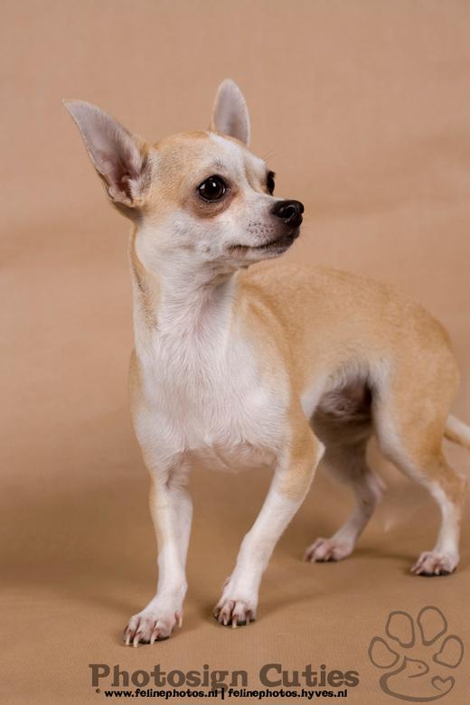 Truusje terug naar baby zijn.. - Model: Truusje<br /> Kleding: Chihuahuadressroom.hyves.nl<br /> <br /> Deze foto komt van de fotoshoot van zondag.