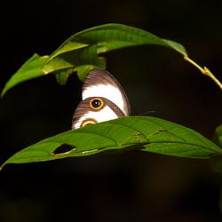 Vlinderlicht in donker bos