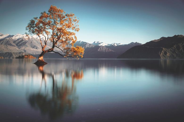 Frailty - Een heldere zonsopkomst bij de roemruchte Wanaka Tree, Nieuw Zeeland. De eenzame boom weerspiegelt in het kalme water.