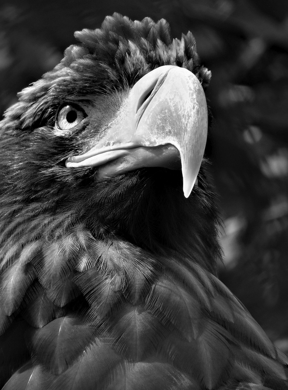 met veren is fijner - in groot formaat zijn de fijne veren in het zachte strijklicht mooi zichtbaar.