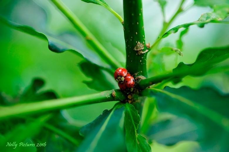 Op het kruispunt van het leven - Even gluren tussen de takken van een eikenboom. Op het kruispunt van het leven werd gewerkt aan de generatie van de t