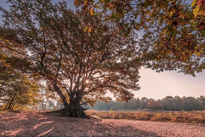 Oude boom in de spotlights
