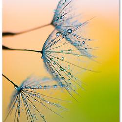 Waterpaint