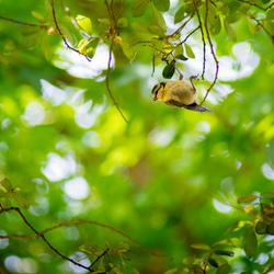 Just hanging