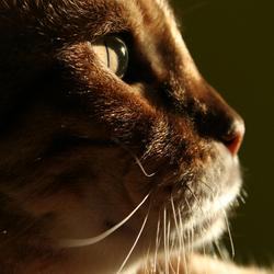 ook een kat kan model staan
