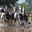 Paardenmarathon Breda.