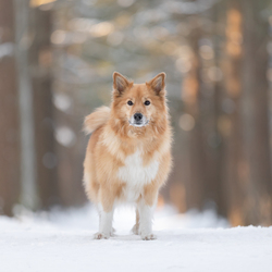Bryja in de sneeuw