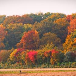 zanderij herfst