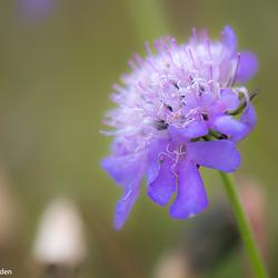 Flowerly purple