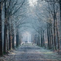 koud in het Liesbos