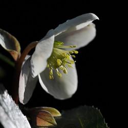 Voorjaar ,Proeven
