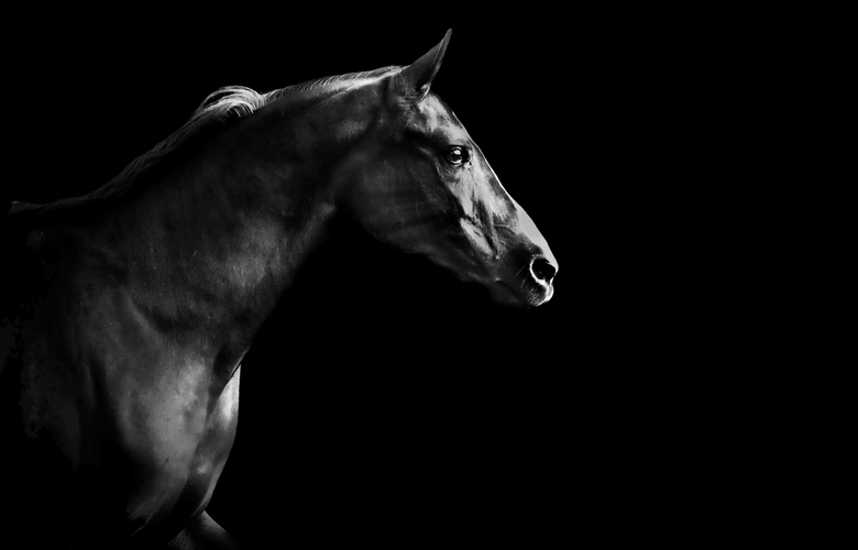 Dark Horse - Arabier