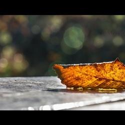 Eerste herfstblad