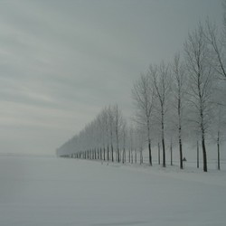 landschap polder