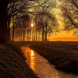 Golden Misty Morning in de Betuwe