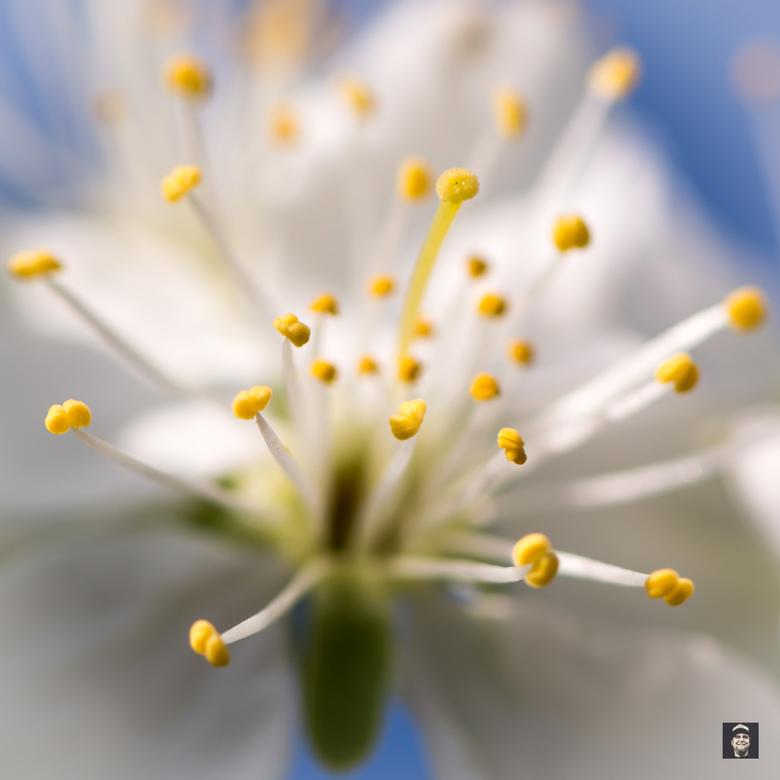 Springtime !!!! - De natuur staat op springen,....heerlijk de lente !!