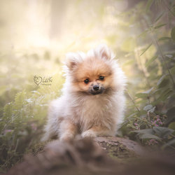 Little Wolfie