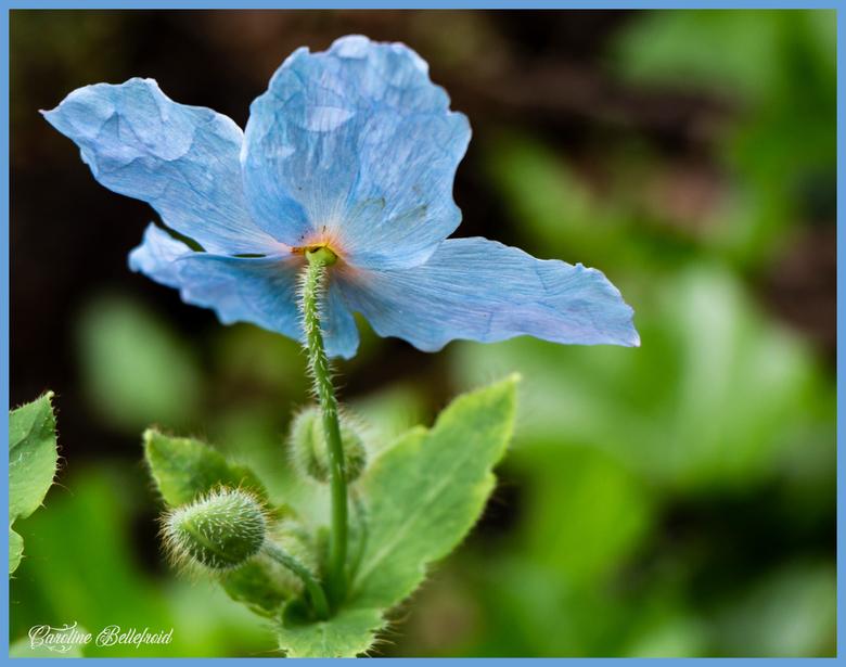 teer bloempje