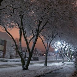 Enlighted by Snow