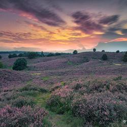 Little Purple Hills....