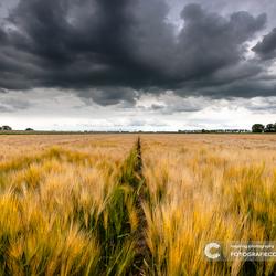 Toen er nog regen viel in Nederland