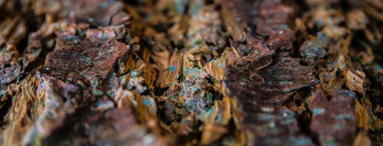 boomschors in detail - de kleuren van de mossen en het relief van deze boomschors geven een abstract beeld.
