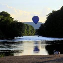 Le chien et le ballonnet.
