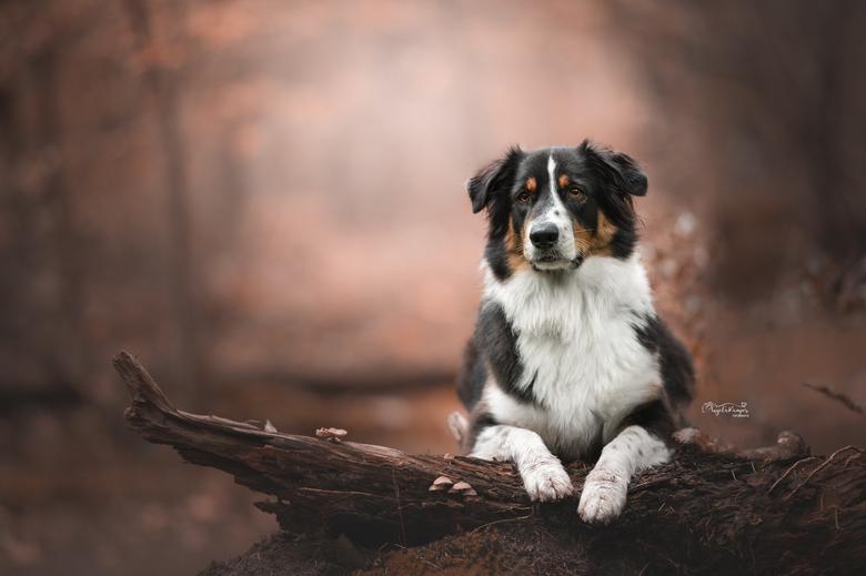 Hondenfotografie - Nala in het herfstbos
